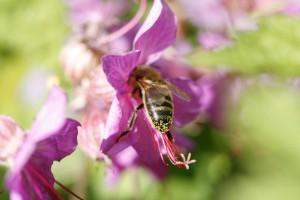 De Bijen 01